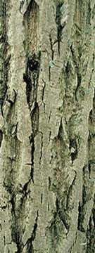 Butternut Bark